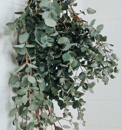 eucalyptus shower spray bottle